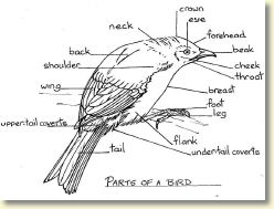 Copy of parts of birds.jpg